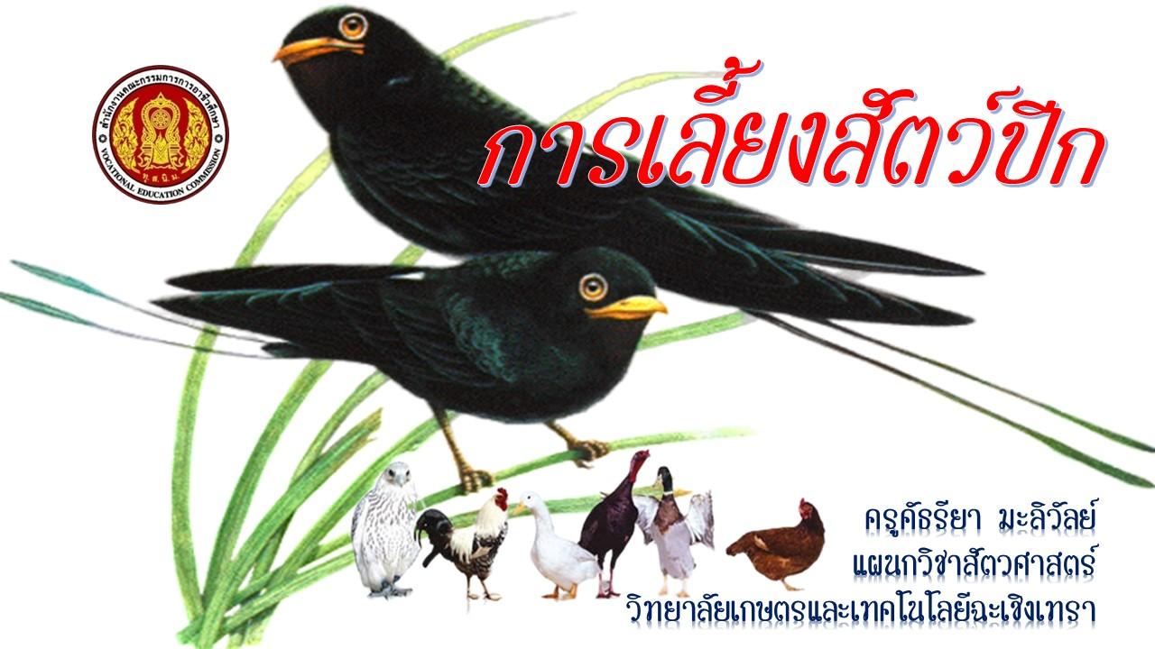 การเลี้ยงสัตว์ปีก