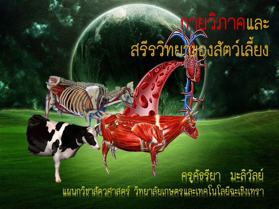 กายวิภาคและสรีรวิทยาของสัตว์เลี้ยง
