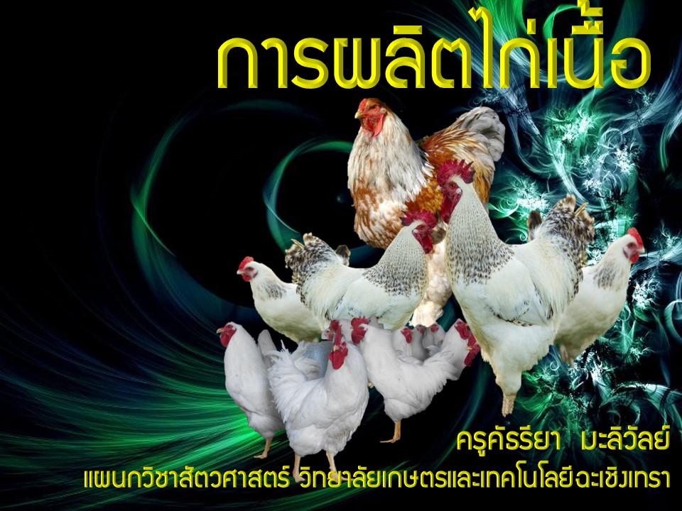 การผลิตไก่เนื้อ